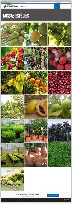 Criação de Site Responsivo para a floricultura Citricultura Paulista de Betim - página especies