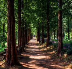 ***Forest path (South Korea) by H.R AN cr.c.