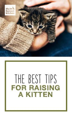 There's nothing cuter than a kitten, but they can be a handful that young. Check out some of the best tips for raising a kitten! #THK #honestkitchen #thehonestkitchen #kitten #cat #training