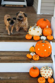 Our Styled Suburban Life: Pumpkin Decorating