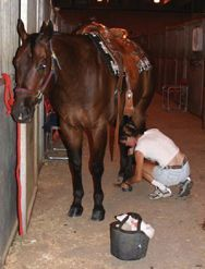 Good tips despite the heavy product pushing Cowboy Magic Grooming Products » Blog Archive 40 Horse Grooming Tips