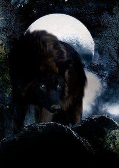 Luar com o lobo...