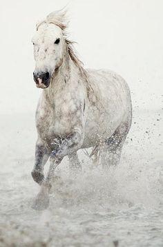 Minimalist Horse Art, White Horse in Water