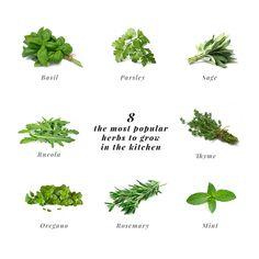 most popular herbs