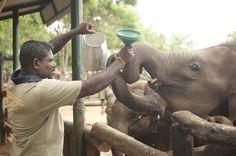 Feeding Time at ETH | conservation Conservation, Elephant, Animals, Animaux, Animal, Animales, Elephants, Canning, Animais