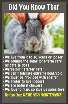 I wish everyone understood this and didn't buy their children bunnies for Easter... I always see them back at the pet store a month or so after... So sad because they can be really sweet companions if only given the right care and love.