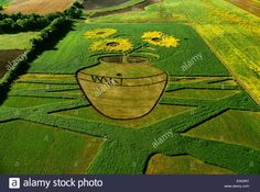 """""""Sunflowers in a vase"""", a field art painting, created by field artist Stan Herd Black Eyed Susan, Sunflowers, Agriculture, Garden Landscaping, Kansas Usa, Vase, Stock Photos, Create, Illustration"""