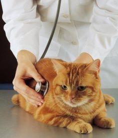 Doenças Gatos