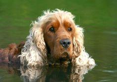 Dogs: Man's Best Friend Or Best Meal?