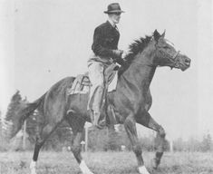 John Richard Young on Collection Horse Training, Dressage, Equestrian, Literature, Bible, Horses, Animals, Collection, Literatura