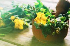 Natural Remedies, Herbs, Fruit, Nature, Food, Parsley, Warts, Home Remedies, Varicose Veins