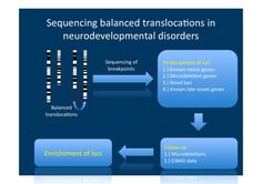 Balanced translocations in neurodevelopmental disorders