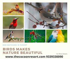 Birds are found in Pangot, Nainital. Visit These Views of birds in #Nainital and enjoy nature with birds. #cocoonresort #cocoonhotel #nainitalresort #nainitalhotel #thecocoonresort #nainital #pangot #birdwatching #birds #naturelovers #nature Nainital, Birdwatching, Camps, Resorts, Parrot, Birds, Nature, Animals, Beautiful
