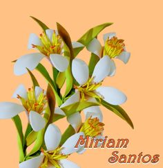Flores de Mira: Jasmim de Eva sem Frisador
