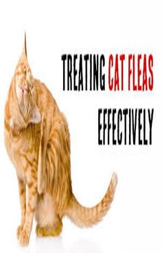cat flea, Ctenocephalides felis, is the most common type found in modern homes. The cat being their preferred host, these fleas can also suck blood from humans, dogs and other animals. Coconut Oil Cats, Cat Health Care, Sick Cat, Flea Treatment, Cat Signs, Cat Fleas, Cat Toys, Cool Cats, Modern Homes