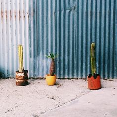 photo by happymundane on Instagram #cactus