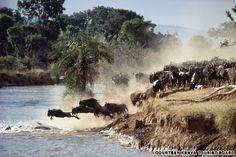 The great migration, Tanzania
