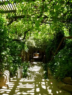 Grape vines and pomegranate trees shade and transpire water to create a comfortable microclimate in the scorching summer. This is the path that leads down to the Forestiere underground home in Fresno, CA.