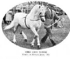 Coed Coch Madog