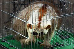 Eek! Here's the horrible truth behind those adorable slow loris videos you can't stop watching.