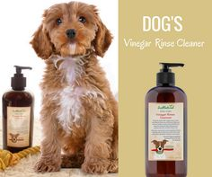 This Vinegar Rinse Is Great For Dogs With Skin Conditions