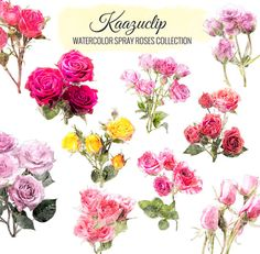 Watercolor Spray Roses Collection  Commercial and by kaazuclip