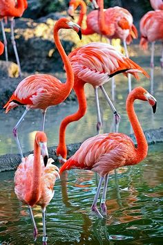 Birds of a feather Foto Flamingo, Flamingo Tattoo, Flamingo Art, Pink Flamingos, Flamingo Wallpaper, Sunset Wallpaper, Beautiful Birds, Animals Beautiful, Cute Animals