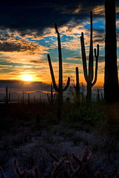 North America's largest cacti can be found in Saguaro National Park, Arizona, which was established to protect the plant's habitat. The saguaro cactus is more than just a symbol of the American West—it provides shelter, nesting areas, and food for many animals. Arizona's Saguaro National Park draws hardy hikers and horseback riders. (photo: Unknown)