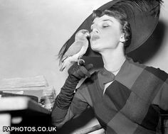 1949 Audrey Hepburn, principle dancer in 'Sauce Tartare' makes friends with Hyacinth Macaw at the National Exhibition of Caged Birds at the Horticultural Hall, London.