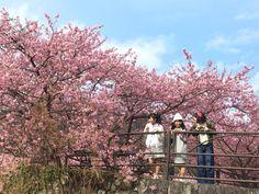 RT @sakura_shokuin: 写真集さくら学院  磯野莉音  大賀咲希  白井沙樹  2016年3月 ...