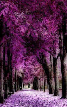 Camino lila