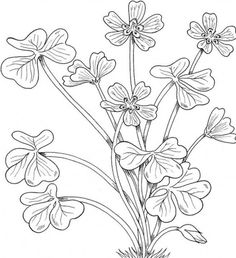 flower Page Printable Coloring Sheets | Printable Montana Flowers Coloring Pages | Kidskat.com