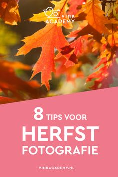 8 tips voor het fotograferen van de herfst • Vink Academy Photoshop, Lightroom, Photography Tips, Herbs, Pictures, Eyelash Glue, Inspiration, Canon Eos, Scrapbook