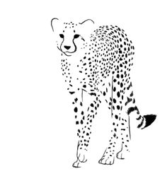 Warrick Ross uploaded this image to 'Nikohlas/Daemon Page'. See the album on… Cheetah Tattoo, Cat Tattoo, Cheetah Drawing, Big Cats Art, Cat Art, Art Sketches, Art Drawings, Tattoo Lettering Fonts, Cheetah Animal
