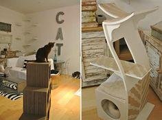 Cat Climbing Shelves, Cat Trees, Catification, San Diego