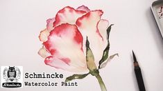 How to paint a rose in watercolor | Painting with Schmincke watercolor set