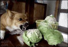 """I love Cauliflowers""...whispers ""aggressively"""