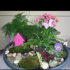 Fun project with kids of all ages... Great for a Mothers Day or Teacher gift... It's a Fairy Garden!...