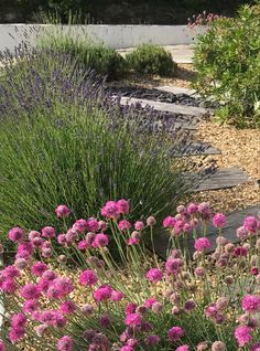 Pink Sea Thrift, Lavender, Oak Sleepers & Pea Shingle Gravel Garden, Pea Gravel, Pea Shingle, Oak Sleepers, Back Gardens, Thrift, Garden Design, Lavender, Sea