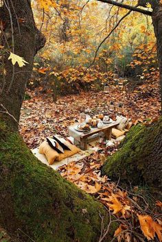 Perfect setting for an autumn picnic