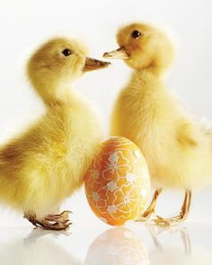 Darling Easter Ducks newly hatched, with vintage style yellow lace Easter Egg. #DdO:) - https://www.pinterest.com/DianaDeeOsborne/easters-exciting-expectations/ - EASTER'S EXCITING EXPECTATIONS. New Life reminds us of Jesus Christ's Resurrection after death.   Photo Info CREDIT: Misty morrning: via tumblr_nlvyjs7JHO1s9poh0o1_540.jpg (JPEG Image, 512×640 pixels)