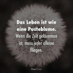 Unless you have the love of your life at your side, because you can only fly in pairs – Science Educ - Weisheiten Zitate Funny Lyrics, Funny Quotes, Life Quotes, Science Education, Education Quotes, Religious Education, German Words, French Quotes, Love Your Life