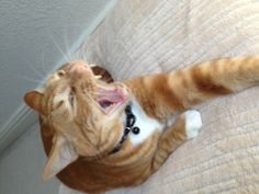 Yawn...being a one household cat is a hard job...I run this joint...