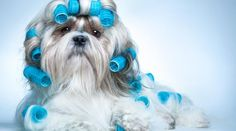 Pelo de cachorro precisa de cuidados para ficar bonito e saudável