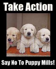 Say NO to puppy mills!!!  #pets #care #puppy #dogs #puppymills #freedom #educate