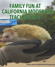 Family Fun at the California Moorpark Teaching Zoo