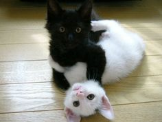If I had two cats like this...I would name them Yin and Yang :)