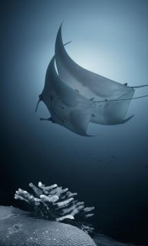 The World Under the Water Under The Water, Under The Sea, Underwater Creatures, Underwater Life, Ocean Creatures, Underwater Photos, Underwater Photography, Life Photography, Amazing Photography