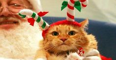 32 Animals Who Are Not Excited to See Santa