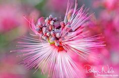"""Fairy Flower"" by Robyn Nola. ""Look deep into nature, and then you will understand everything better."" ~Albert Einstein"